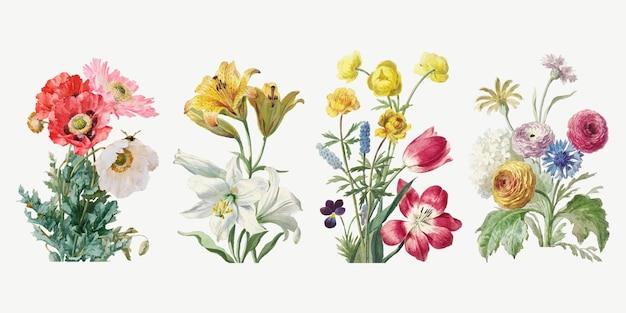 Botanischer illustrationssatz der weinleseblume