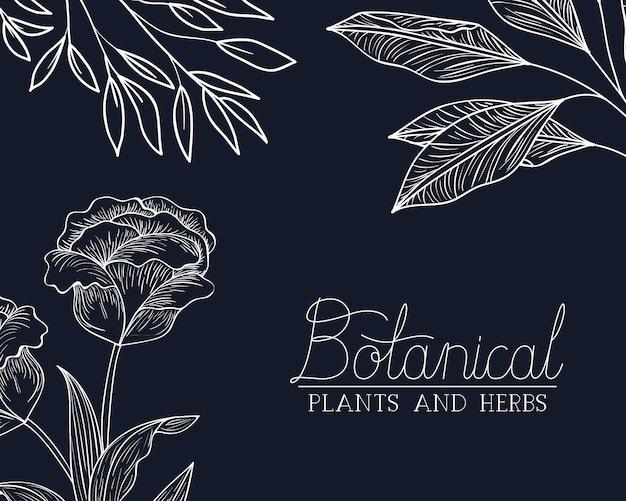 Botanisches etikett mit pflanzen und kräutern