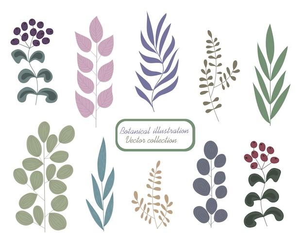 Botanisches farbset