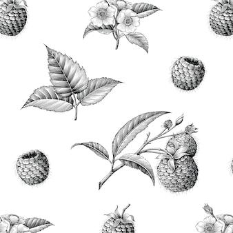 Botanisches nahtloses muster der himbeerfrucht hand zeichnen vintage-stil, isoliert.
