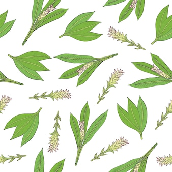 Botanisches nahtloses muster mit grünen kurkuma-blättern und blütenständen
