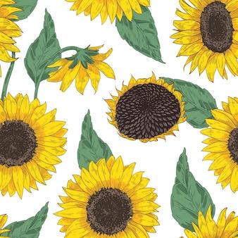 Botanisches nahtloses muster mit sonnenblumenköpfen. Premium Vektoren