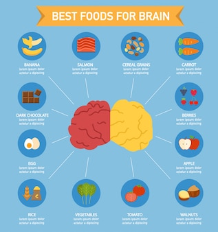 Brain power-lebensmittel infographic, illustration