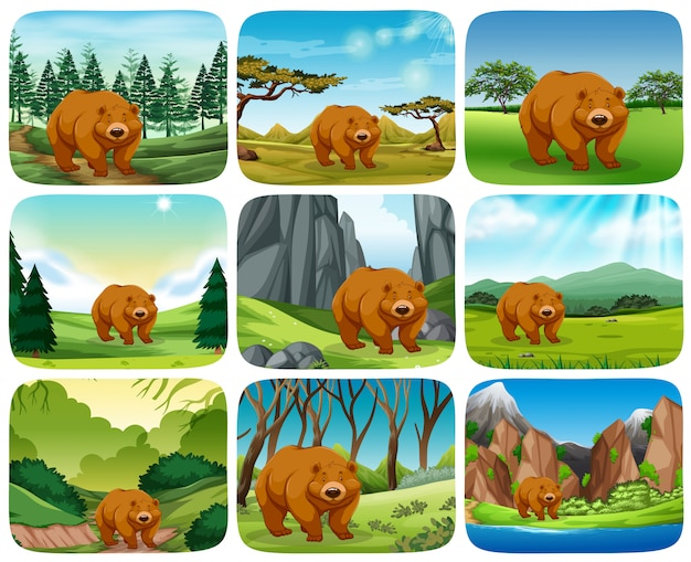 Braunbär in naturszenen