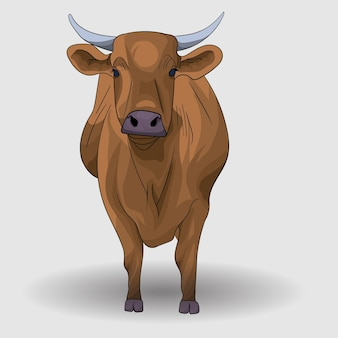 Braune kuh illustration und vektor