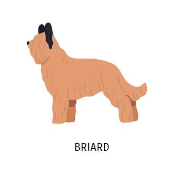Briard oder berger de brie. entzückender großer hütehund oder schäferhund mit dem langen haar lokalisiert auf weißem hintergrund. nettes reinrassiges haustier oder haustier. farbige vektorillustration im flachen cartoon-stil.