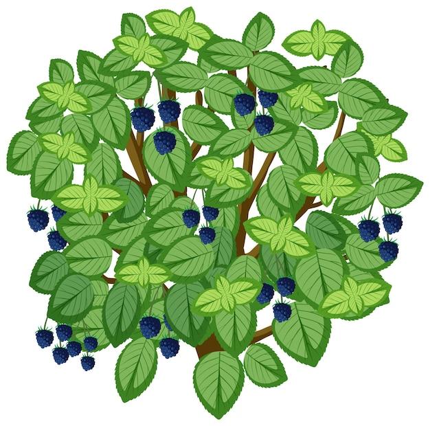 Brombeerbaum im cartoon-stil isoliert auf weißem hintergrund