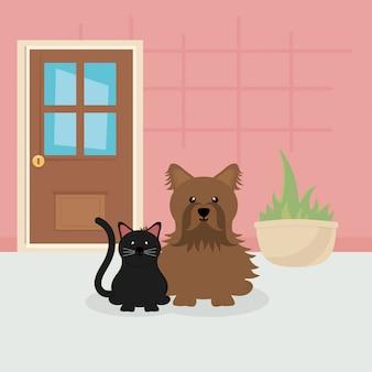Brown-hund und schwarze katze, die in der raumhaustierpflege sitzen