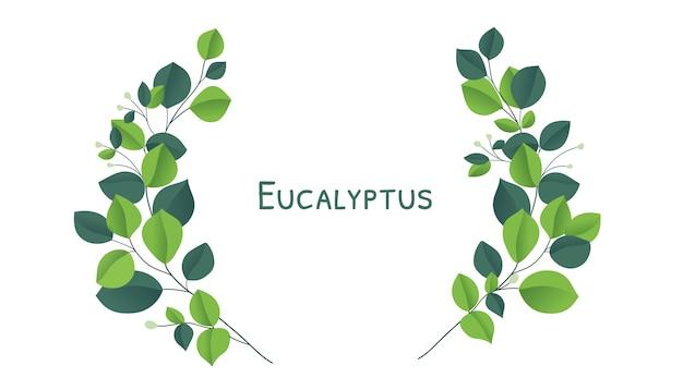 Brunch des silbernen dollars des eukalyptus. natürliches laub des schönen dekorativen eukalyptus. grüne eukalyptusblätter.