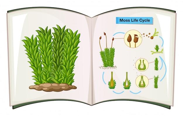 Buch, das den lebenszyklus von moos zeigt