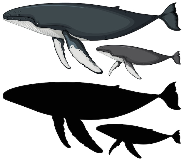 Buckelwal charaktere und seine silhouette auf weiß