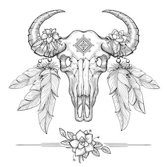 Büffel- oder bisonschädel