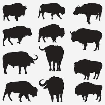 Büffel-silhouetten
