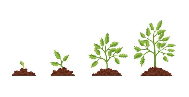 Bühnenwachstum pflanzenillustration
