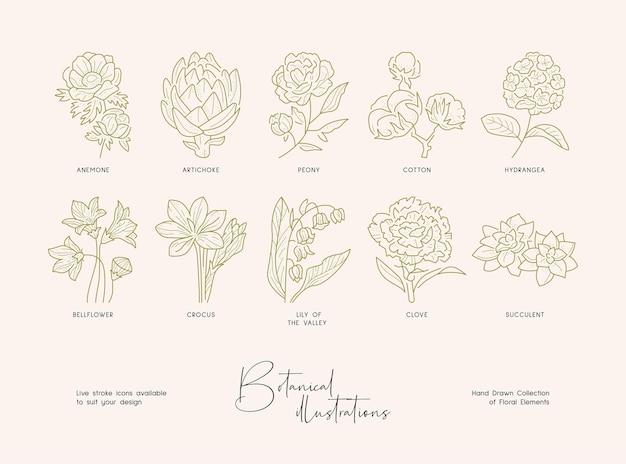Bündel detaillierter botanischer zeichnungen von blühenden wildblumen sammlung handgezeichneter pflanzen