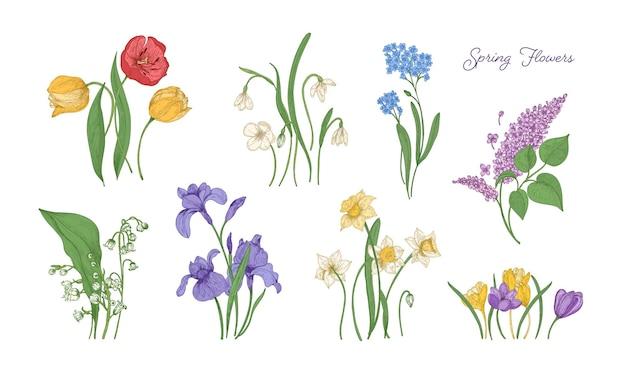 Bündel natürlicher zeichnungen von frühlingsblumen - tulpe, flieder, narzisse, vergissmeinnicht, krokus, maiglöckchen, iris, schneeglöckchen. set von blühenden blühenden pflanzen. bunte vektorillustration.