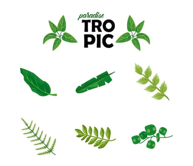 Bündel von acht blättern pflanzt grüne naturikonen und tropische beschriftung