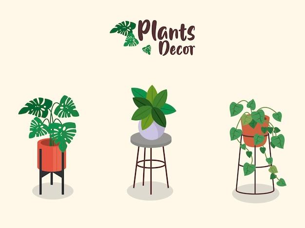 Bündel von drei heimischen pflanzen in keramik töpfen dekor und schriftzug