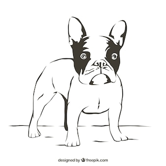 Bulldog outline