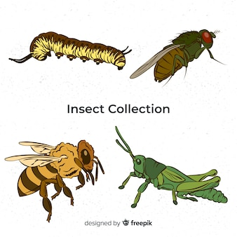 Bunte hand gezeichnete insektensammlung