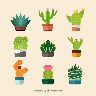 Bunte kaktuskollektion