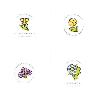 Bunte set-design-vorlagen - gesunde kräuter und gewürze. verschiedene heil- und kosmetikpflanzen - ringelblume, löwenzahn, baldrian und mutterkraut. logos im trendigen linearen stil.