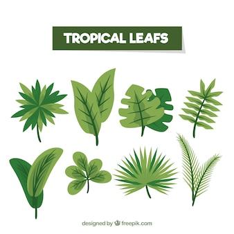Bunte tropische blattsammlung mit flachem design