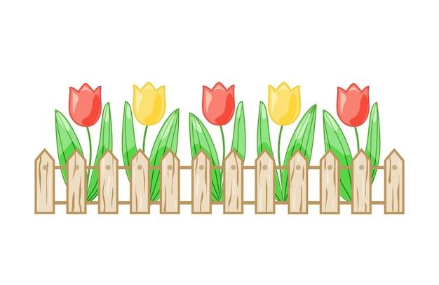 Bunte tulpen in einem blumenbeet hinter einem zaun auf einem weißen, isolierten hintergrund. vektor.