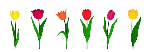 Bunte tulpen setzen isolierten weißen hintergrund.
