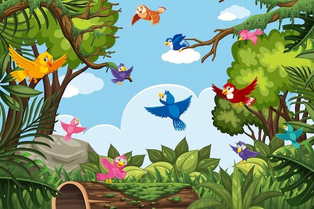 Bunte vögel in der dschungelszene