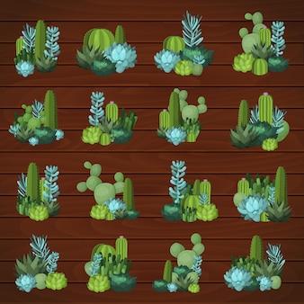 Bunter kaktus und saftiges set