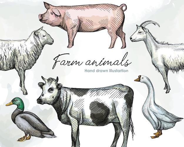 Buntes aquarell hand gezeichneter skizzensatz von nutztieren auf einem weißen hintergrund. vieh. haustiere. schwein, weiße gans mit langem hals, ente, schaf, ziege