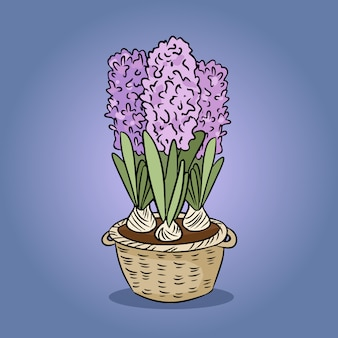 Buntes bild der hyazinthenblume
