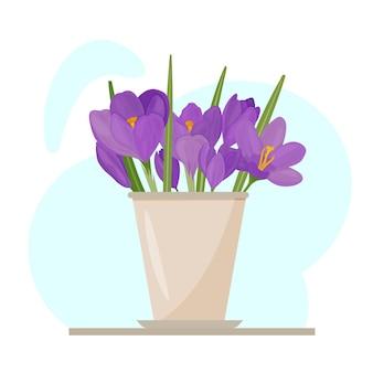 Buntes bild von lila krokusblüten in einem topf. zeichnung einer zimmerpflanze. lila primeln. frühlingsblumen.