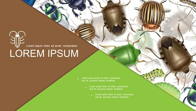 Buntes insektenkonzept mit stinkender skarabäus- und colorado-kartoffelkäfer-raupenmücke im realistischen stil