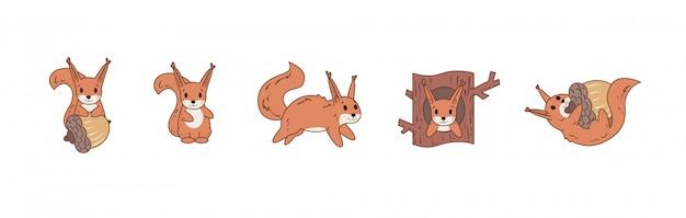 Buntes komisches eichhörnchen, das mit nuss spielt und springt. satz von symbolen.