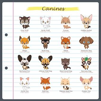Canine illustrationen mit regelmäßigen und wissenschaftlichen namen
