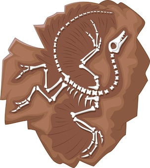 Cartoon archaeopteryx fossil