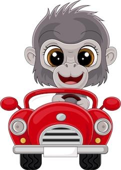 Cartoon-baby-gorilla, der rotes auto fährt