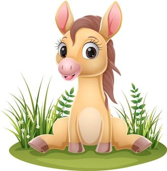 Cartoon-baby-pferd sitzt im gras