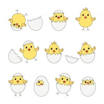 Cartoon ei küken und muscheln, baby hühner.