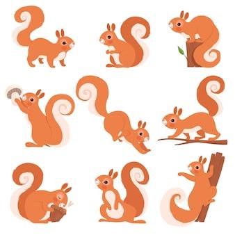 Cartoon eichhörnchen. lustige waldwildtiere, die stehende und springende eichhörnchenclipart-sammlung laufen