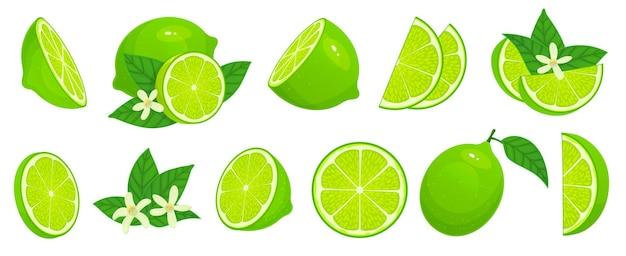 Cartoon kalk. limettenscheiben, grüne zitrusfrucht mit blättern und isoliertem illustrationssatz der limettenblüte.