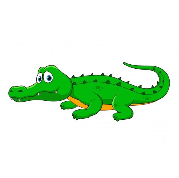 Cartoon-krokodil