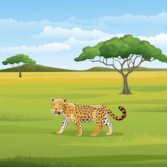 Cartoon leopard in der savanne