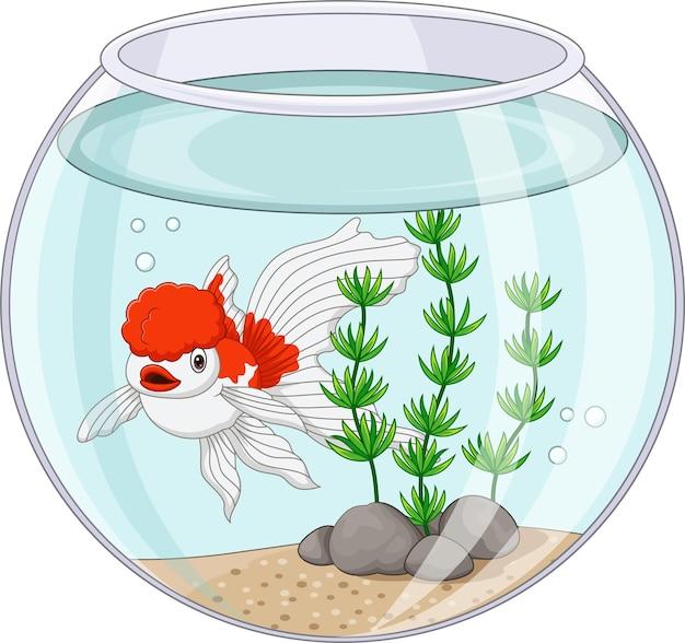 Cartoon-oranda-goldfisch, der im goldfischglas schwimmt