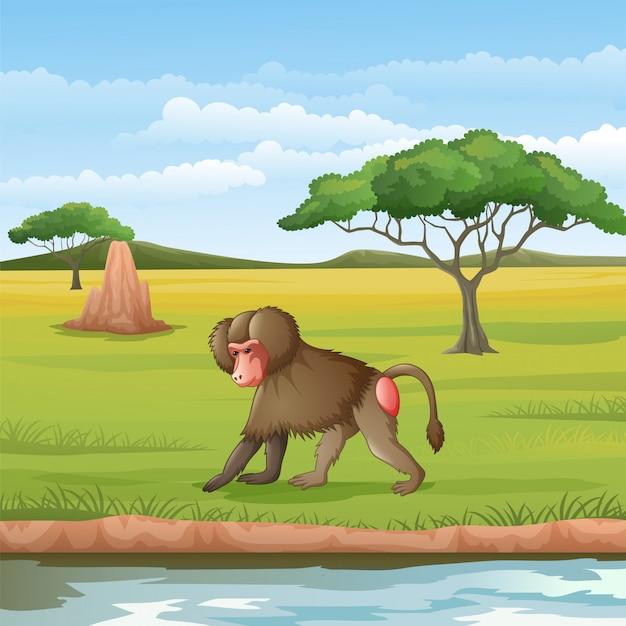 Cartoon pavian in der savanne