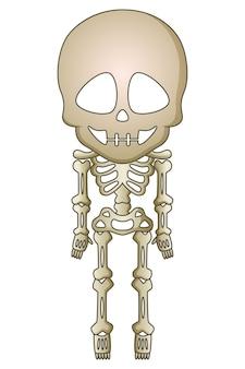 Cartoon skelett