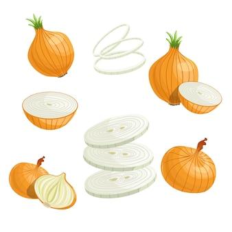Cartoon zwiebeln gesetzt. ganze zwiebel, geschnitten, zwiebelringe. einfach. illustration von frischem gemüse aus biologischem anbau. auf weißem hintergrund.