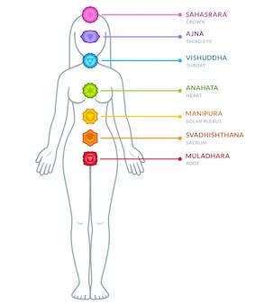 Chakren des männlichen körpers infographic
